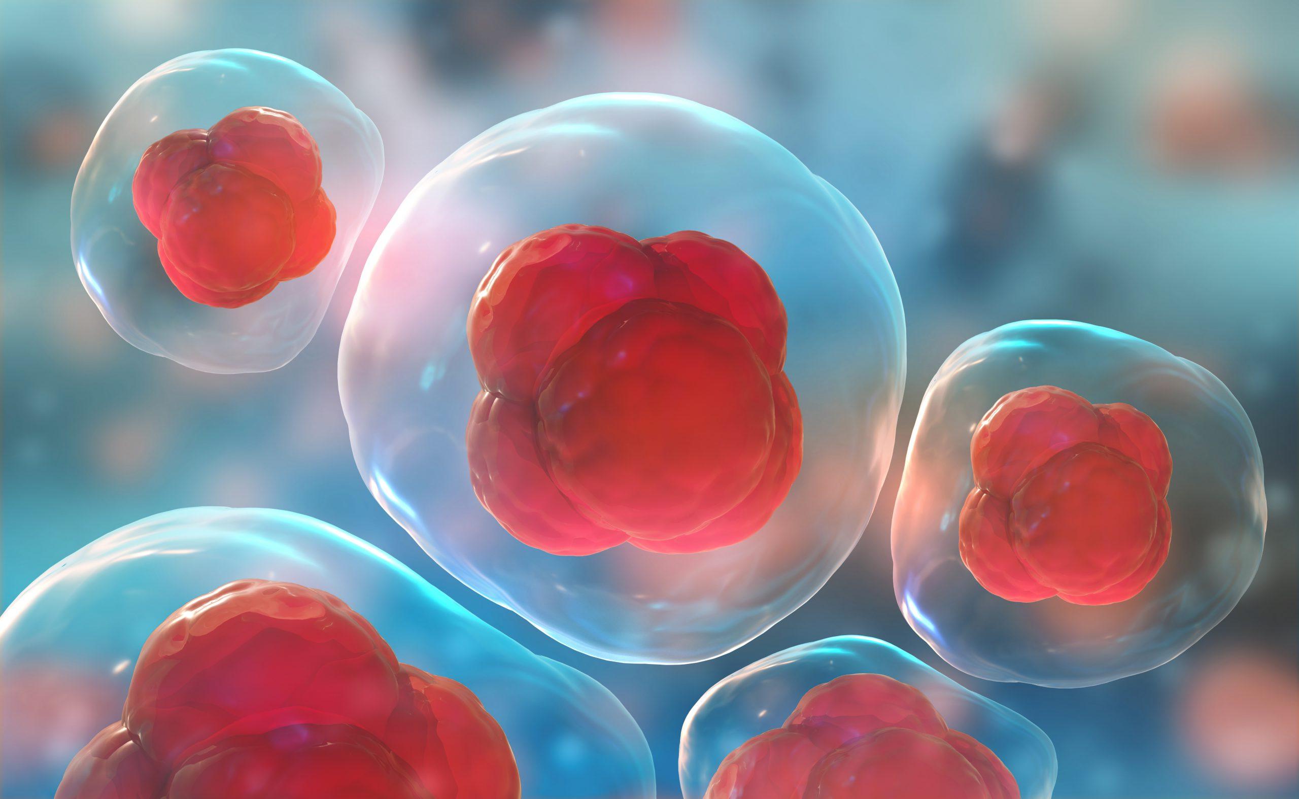 stamcellen navelstreng